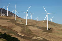 A hillside filled with wind turbines