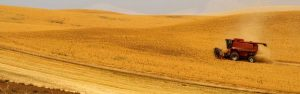 A combine harvester harvests wheat in Eastern Washington.