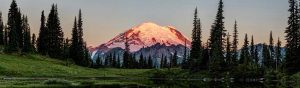 The sunrises on the face of Mount Rainier behind a field of trees and grass