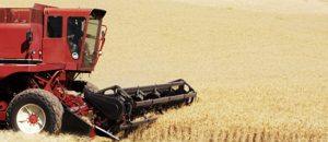 A harvester harvests wheat in Eastern Washington