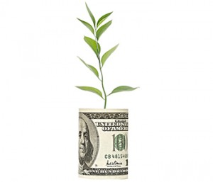 A rolled up bundle of one hundred dollar bills with a plant growing out of it