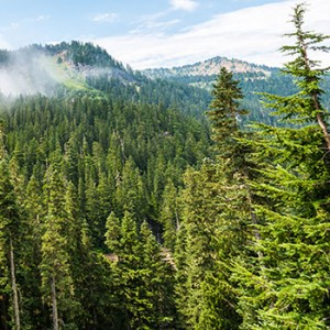 A scenic view of Washington State's forests with a mountain in the background