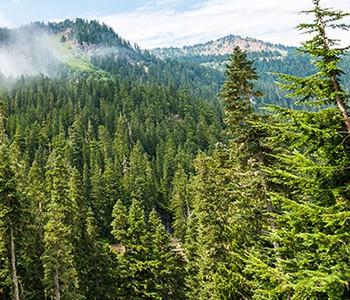 forestlands