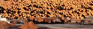 Photo of stacked logs awaiting shipment overseas.