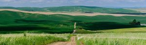 a dirt road disappears in the distance among the rolling hills of Eastern Washington