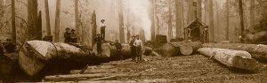 Turn of the century loggers pose with the logs they have just harvested in a remote part of Washington State