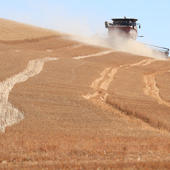 wheat harvest eastern Washington