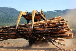 A tractor lifts a bunch of logs, ready for conversion into lumber.