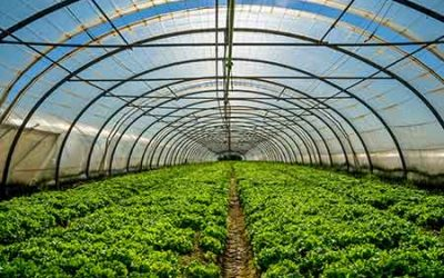 Phytelligence cultivates new agriculture business model.