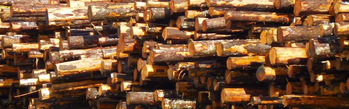 Una pila di legname di Washington è accatastata, in attesa di essere consegnata al mulino.